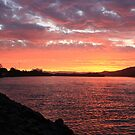 Tweed River Red ... by gail woodbury