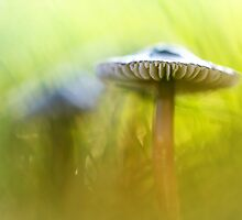 Mighty Marvelous Mushroom.... by Bob Daalder