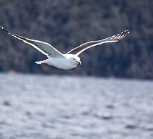 Gull by Mathieu Longvert