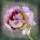 Linen Lady by RC deWinter