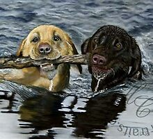 Labrador Dogs swimming by Helen Chugg