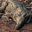 Never smile at a crocodile by Julia Harwood