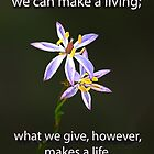What we give  by Julia Harwood