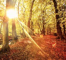Glorious Fall by Chopen