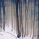 Whispers of the Forest - Forest Trees with Snow by Denis Marsili