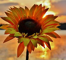 Sunflower Sunset by Karin Pinkham