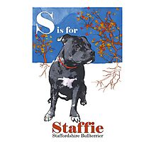 S is for Staffie Photographic Print