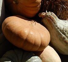 Fall pumpkin fest by LManfredi