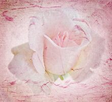 Gently Pink Textured Rose by MotherNature2