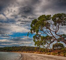 Great Taylors Bay by Paul Amyes