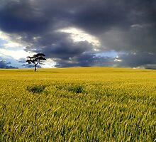 Stormy Australian Rural Landscape by jwwallace