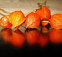 Chinese Lanterns by Eileen McVey