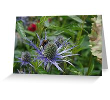 Bumblebee Thistle Greeting Card