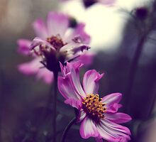 Pink flowers  by Marie Charrois