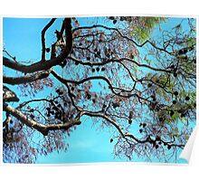 Pine Cones Falling............................Beware Poster