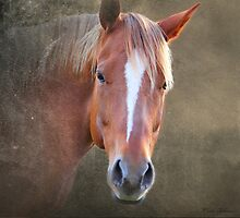 horse by mark ashkenazi
