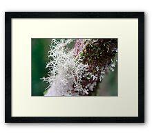 Life Form - II Framed Print