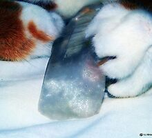 Crystal Paws by Kristie Theobald