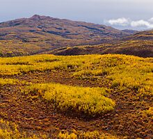 Fall taiga recovering from fire, Fox Lake burn, Yukon Territory, Canada by ImagoBorealis