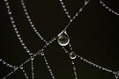 Dewdrops by David Clarke