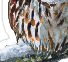 Tawny Owl - cold winter Sticker
