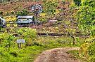 Barton Creek Mennonite's Property in Belize, Central America by 242Digital
