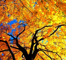 Explosion of Colors by Brian Gaynor