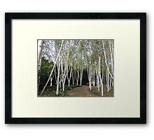 White Avenue Framed Print