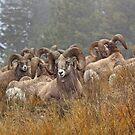 Ram Club by JamesA1