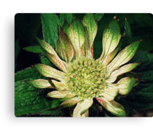 Greenfingers! Canvas Print