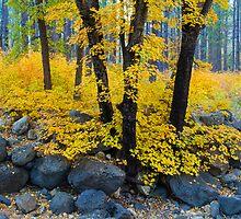 Autumn Gold by BGSPhoto