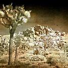 Far Side of the Desert  by Anne  McGinn