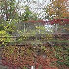 Sixth Street Embankment, Autumn Colors, Abandoned Pennsylvania Railroad Embankment, Jersey City, New Jersey by lenspiro