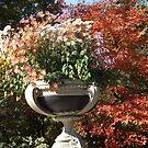 Central Park, Autumn Colors, New York City by lenspiro