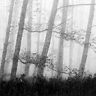 Forest in the autumn mist by lorenzodaveri