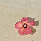 Flower in the Ocean by jcimagery