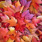Leaf Boquet by Beth Mason
