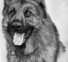 German Shepherd  by Damian May