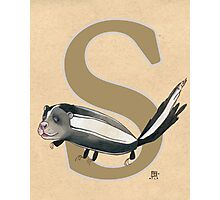 S is for SKUNK Photographic Print