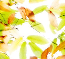 Leaves Splash Abstract 3 by Natalie Kinnear