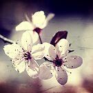 Memory of Spring by Beata  Czyzowska Young