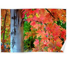 Essence Of Fall Poster