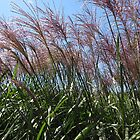 Purple Grasses by Marie Van Schie