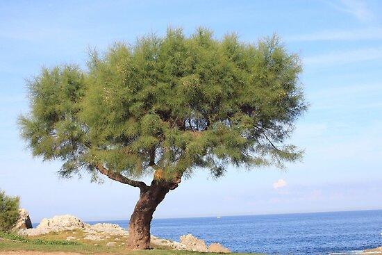 Beach Tree by missmoneypenny