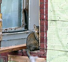 Window Cat by Susan S. Kline
