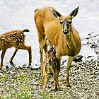 deer family by alex skelly