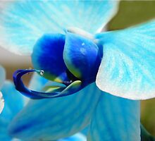 Blue Orchid by WildestArt