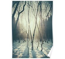 Peaceful Forrest Poster