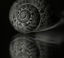 Snail reflection by ACPerona