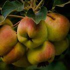 Organic lady apples by Celeste Mookherjee